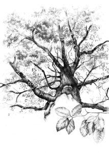 Szkoła rysunku rysowanie drzew